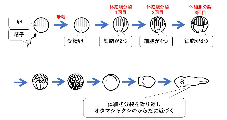 を 作る 精子