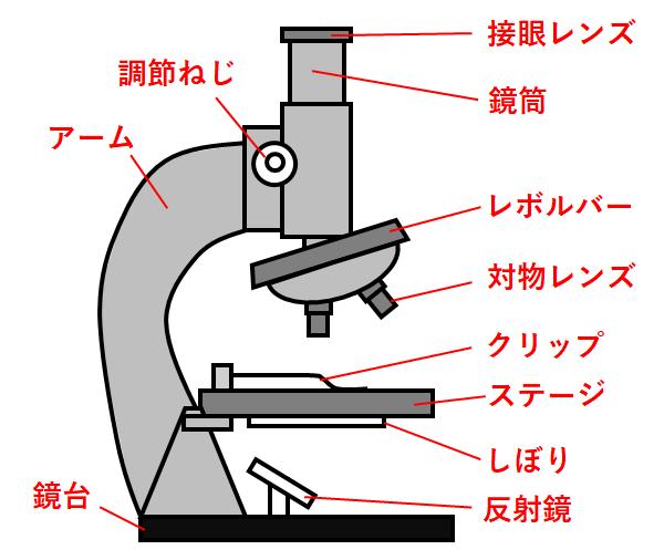 名称 顕微鏡 生物顕微鏡の各部の説明